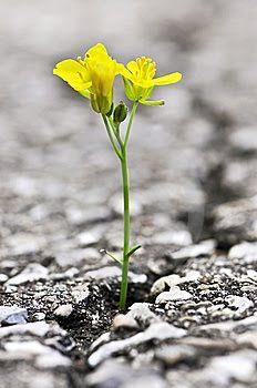 32903a9a98473841d90c6140d829b59e--flower-blossom-flower-petals-1